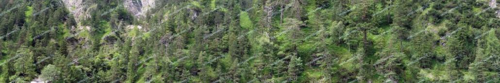 """Modellbahnhintergrund """"Bewaldeter Steilhang"""""""