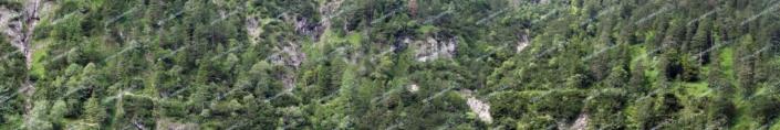 Bewaldeter Steilhang Teil 2 – Modellbahn Hintergrund 300 x 50 cm 4