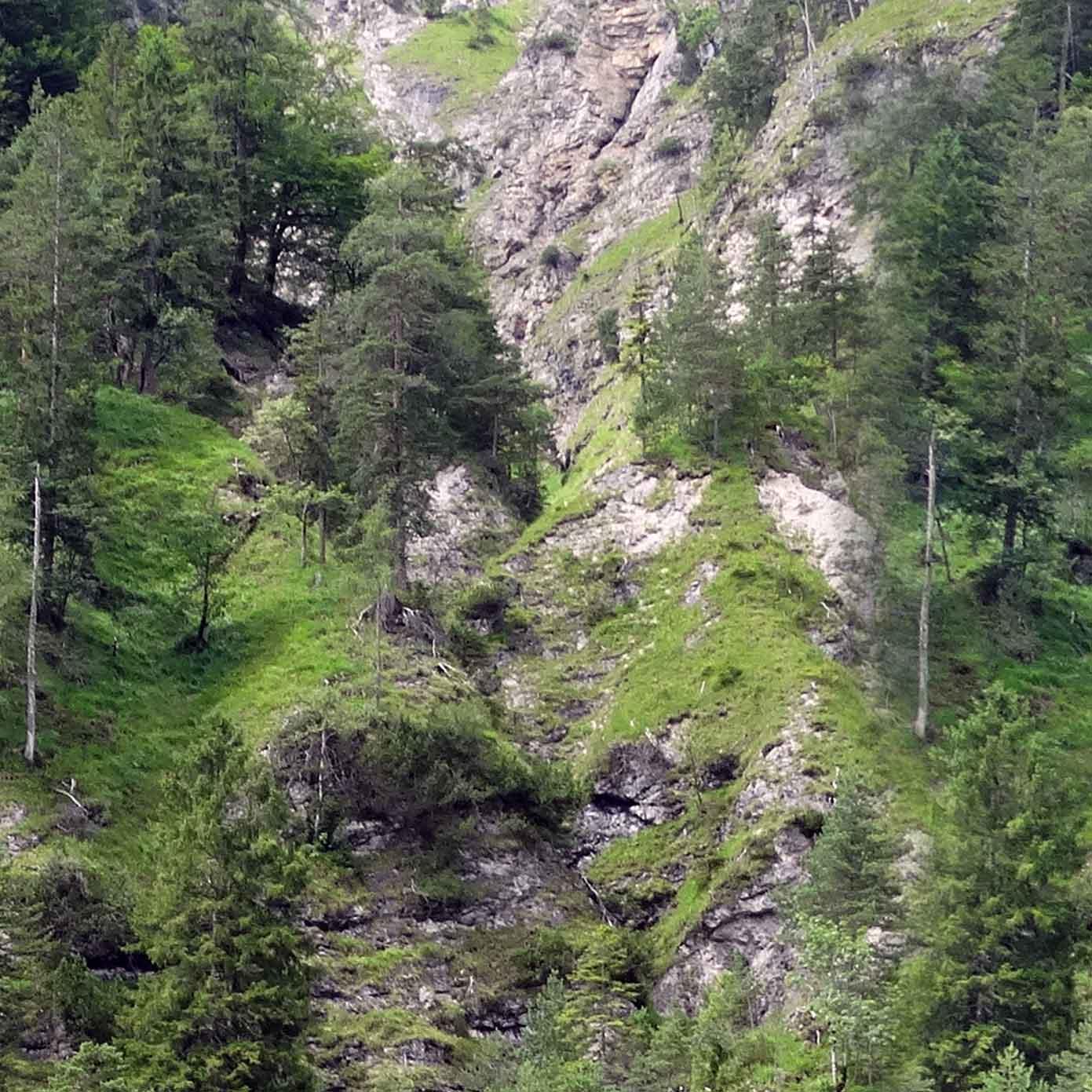 Bewaldeter Steilhang Teil 2 – Modellbahn Hintergrund 300 x 50 cm 2