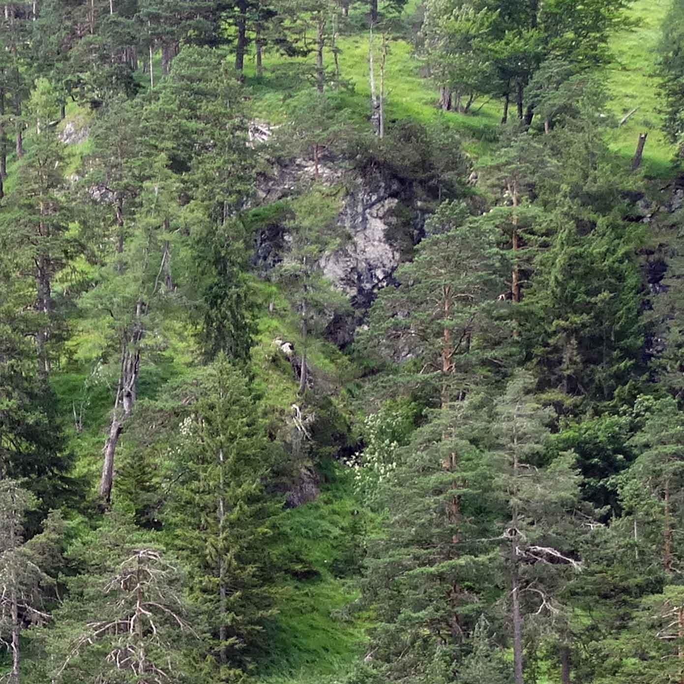 Bewaldeter Steilhang Teil 2 – Modellbahn Hintergrund 300 x 50 cm 3