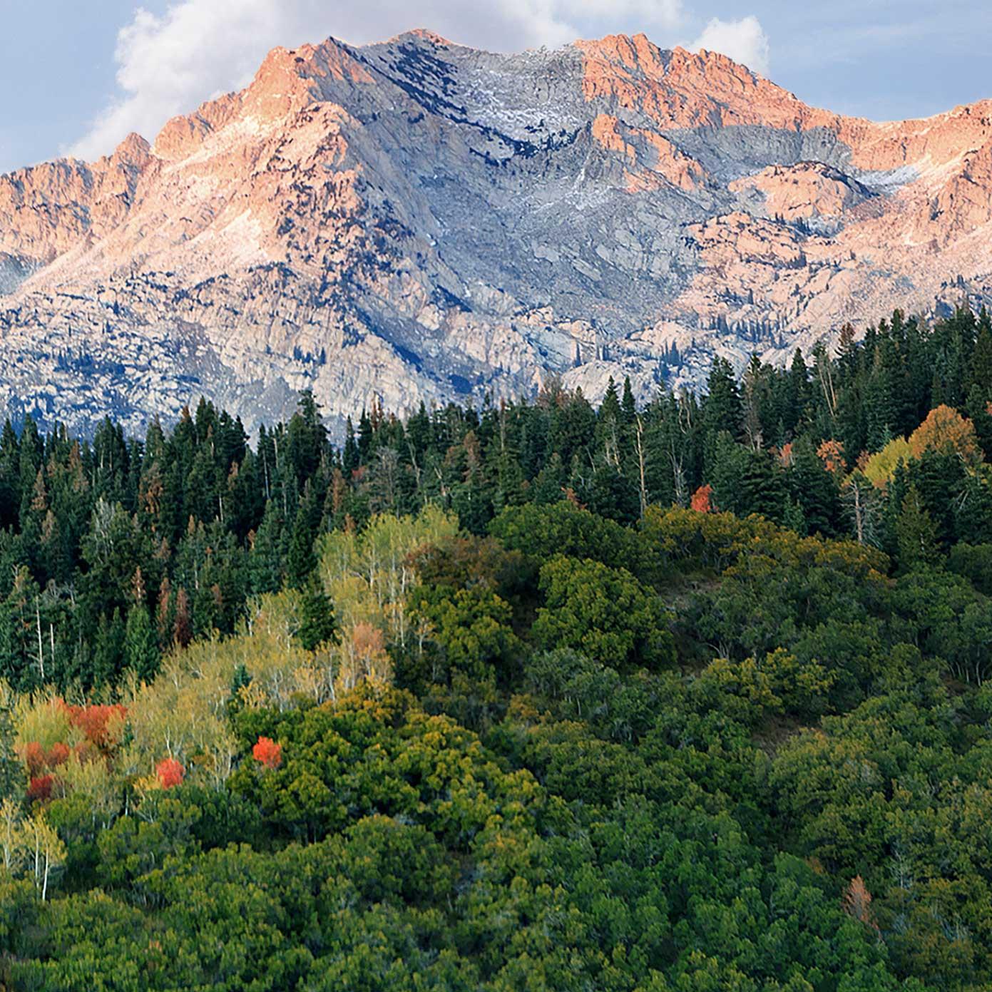 Landschaft mit Wald und Bergen – Modellbahn Hintergrund 300cm x 50 cm 1