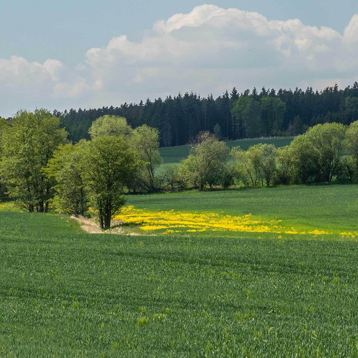 Münsterland Teil 1 – Modellbahn Hintergrund 300cm x 50 cm 1