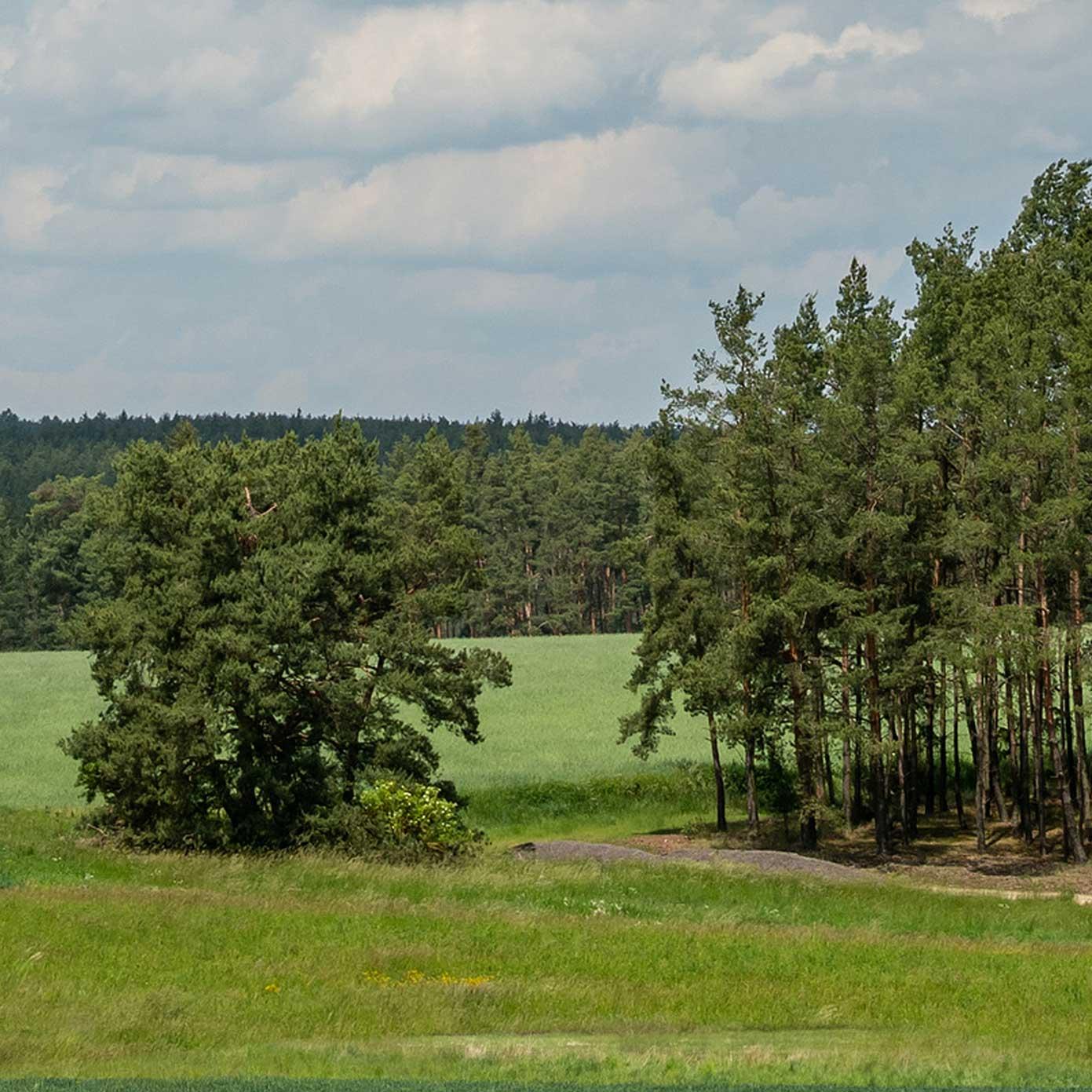Münsterland Teil 2 – Modellbahn Hintergrund 300cm x 50 cm 1