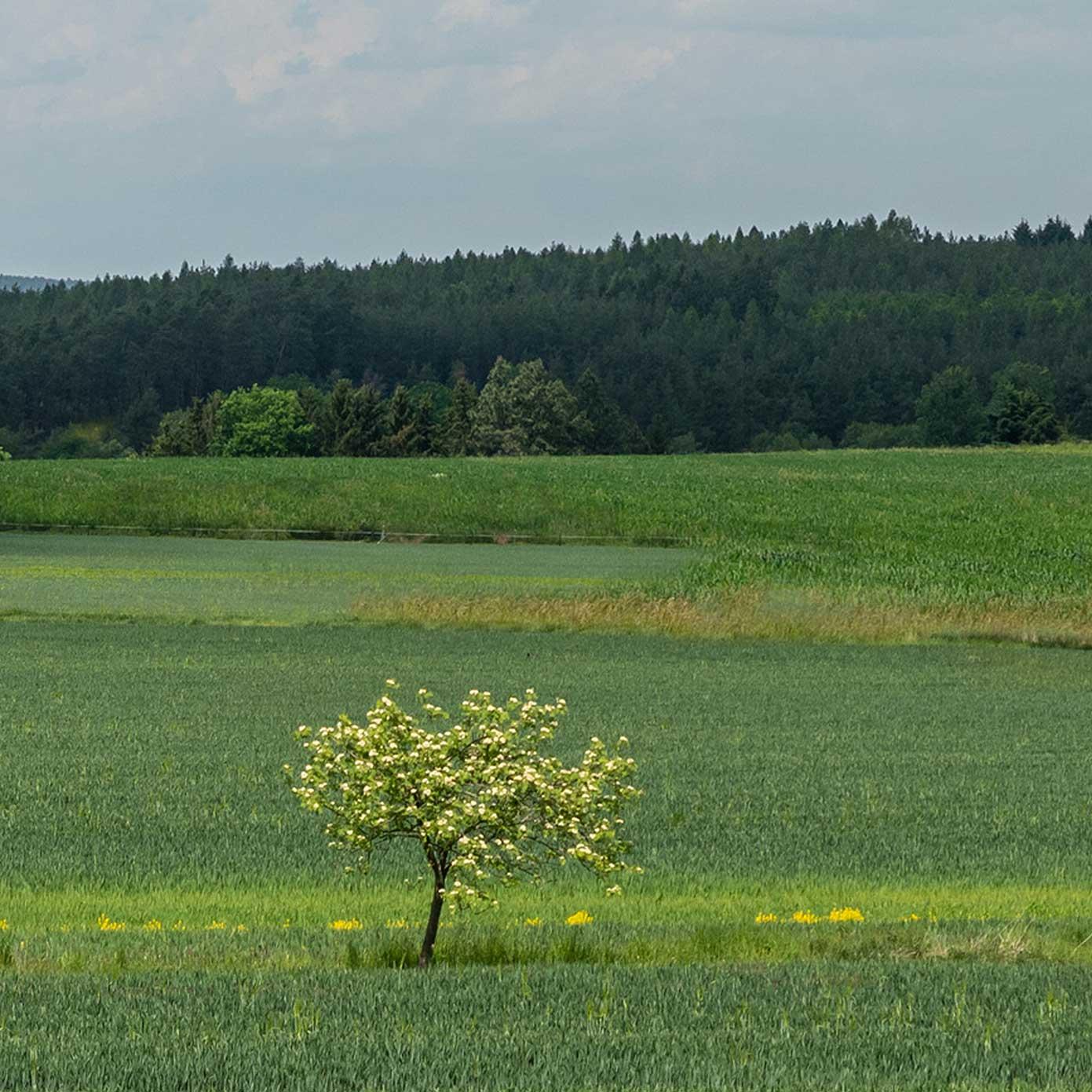 Münsterland Teil 2 – Modellbahn Hintergrund 300cm x 50 cm 2