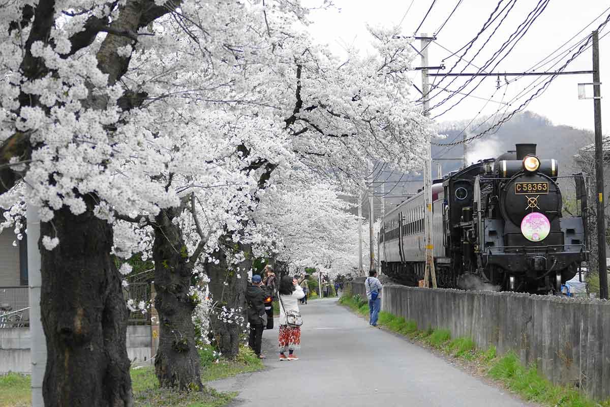 web-1200-Nagatoro_Sakura_SL-By-Alachuk 3