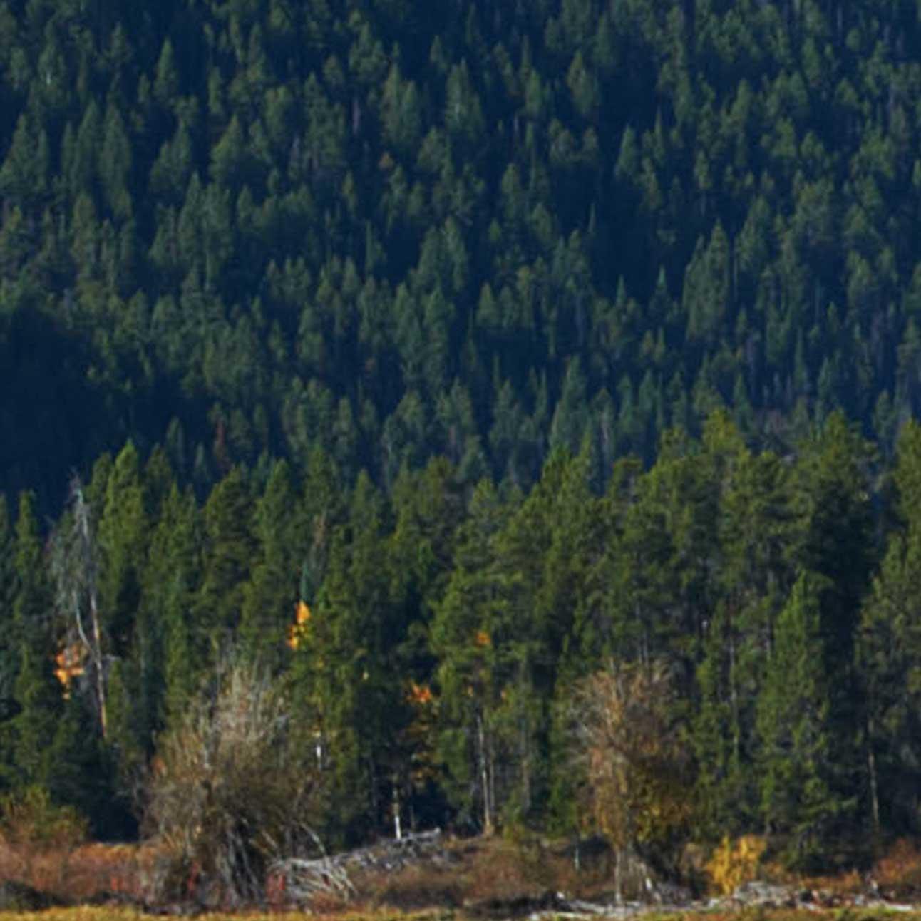 """Modellbahn Hintergrund """"Yellowstone"""" auf 3 x 0,5 Meter 9"""